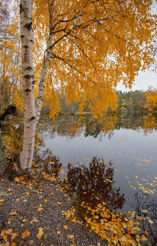 Kuva: Jarmo Nieminen