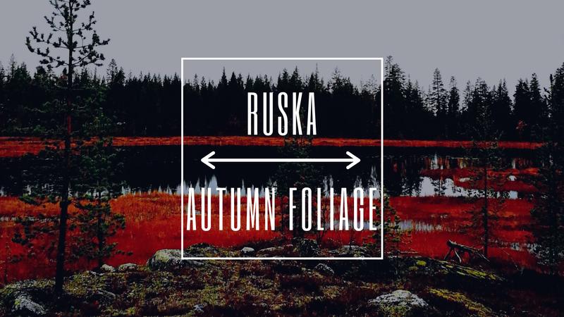 Lapland's 8 seasons: Autumn Foliage