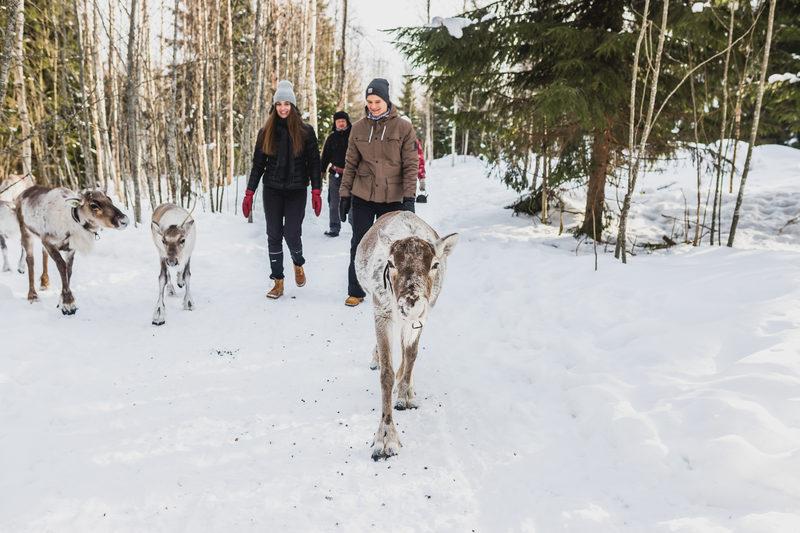 Porokävely ja ruokailu lumisessä metsässä