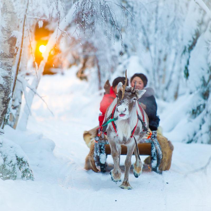 Побывать всей семьей в настоящей зимней сказке