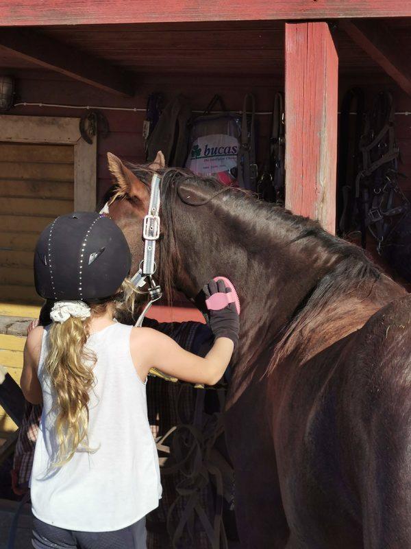 Hevostoiminta yksilöohjauksena