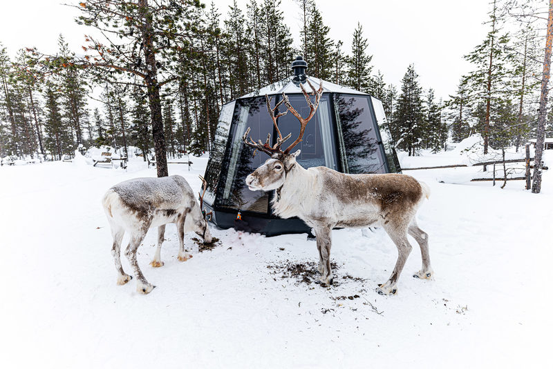 REINDEER'S TRAVELS - REINDEER LODGE, SAARISELKÄ