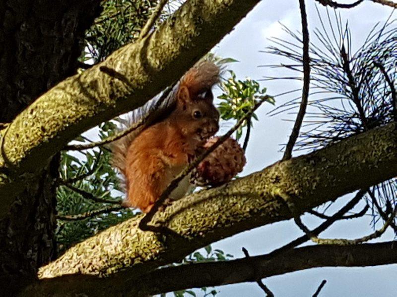 Puutarhan asukas, Garden Squirrel