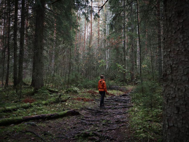 Syksyinen hyvinvointiretki Isojärven kansallispuistossa