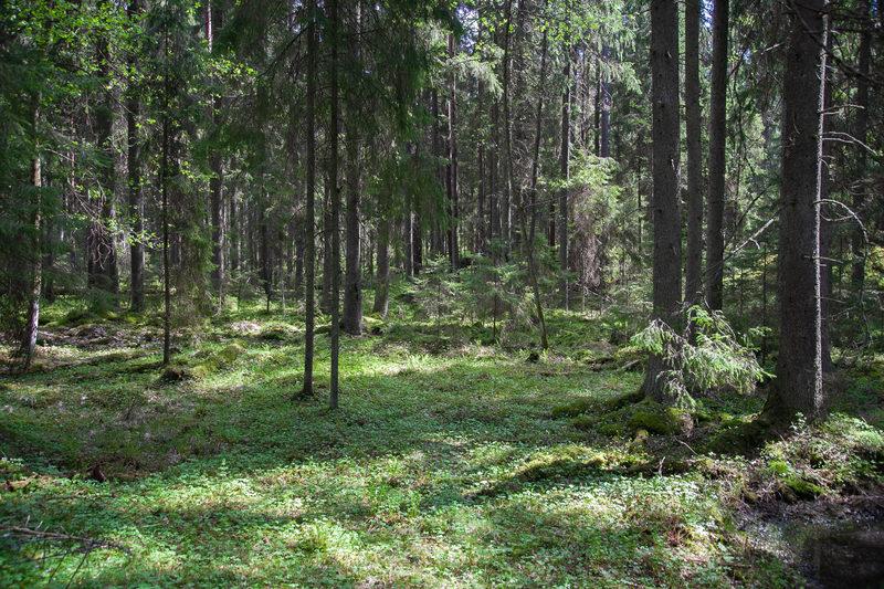 Hyvinvointiretki Isojärven kansallispuistoon