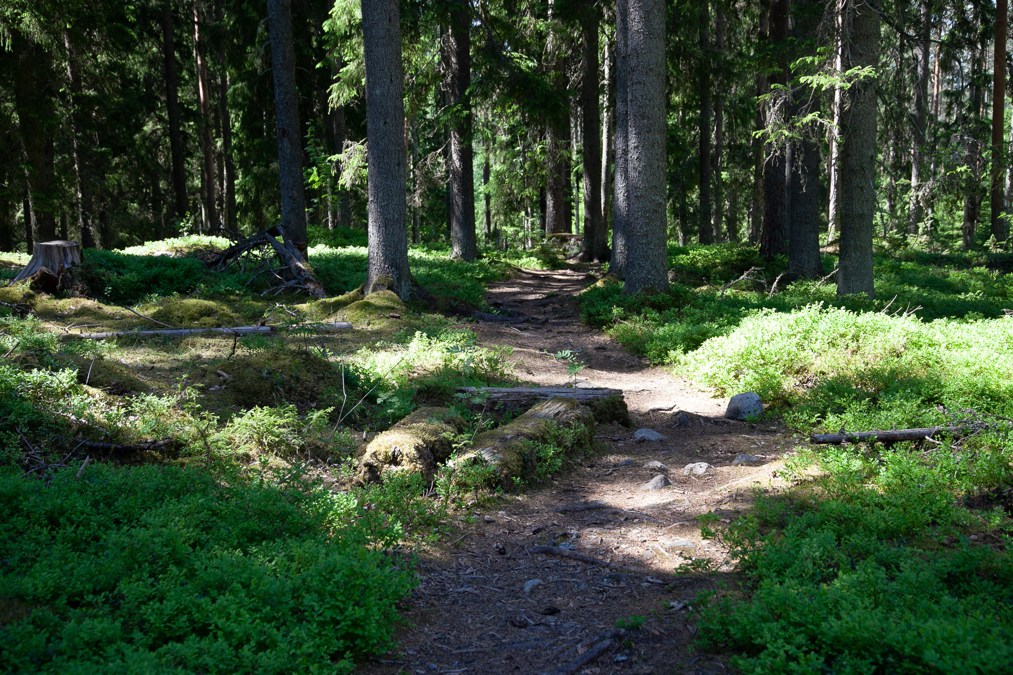 Explore Isojärvi National Park
