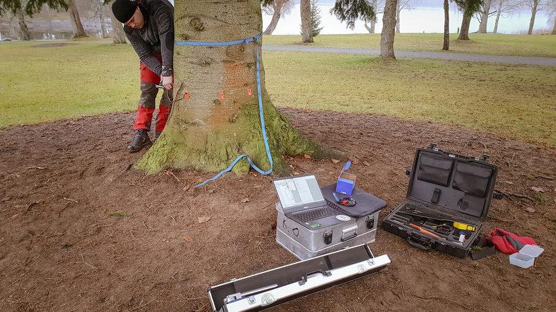 Ammattitaitoinen Arboristi palveluksessasi