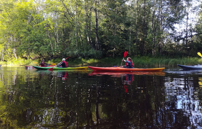Weekly public kayaking safari to River Oulu delta