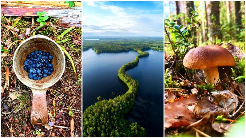 LAKELAND - Berries & Mushrooms Go Wild