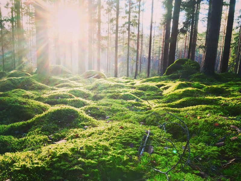 HELSINKI - Nuuksio National Park - Relax and Recharge in Nature with Mindful Walk