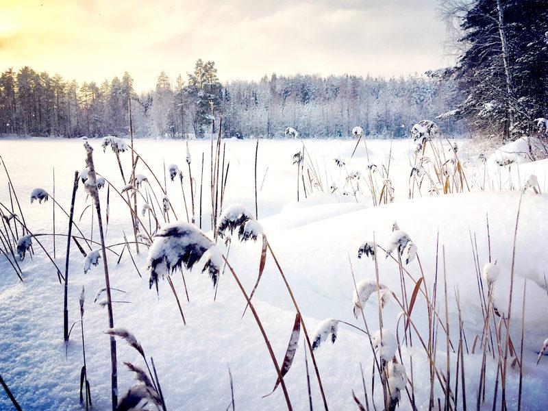 Hyvinvointiluento ja Rentoutusretki Luonnonhelmaan
