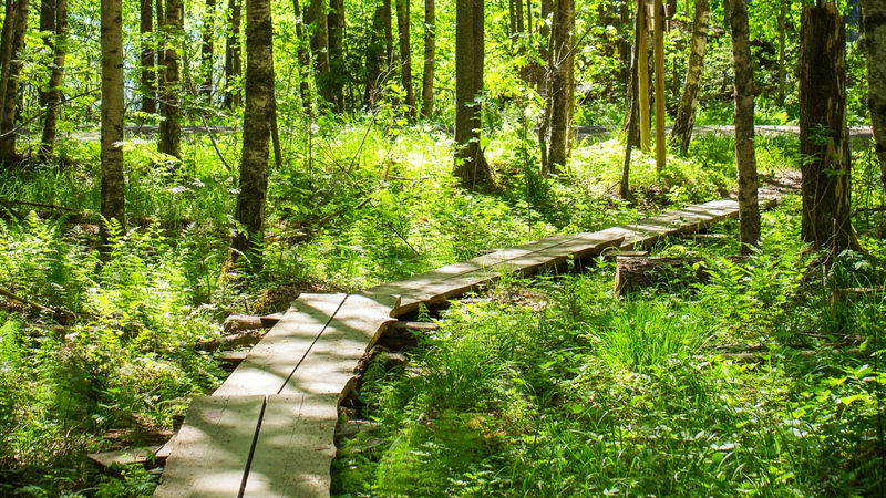 Hike the Forest Trails