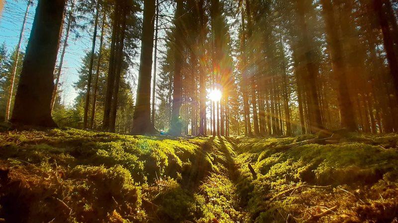 Luontorentoutus etänä