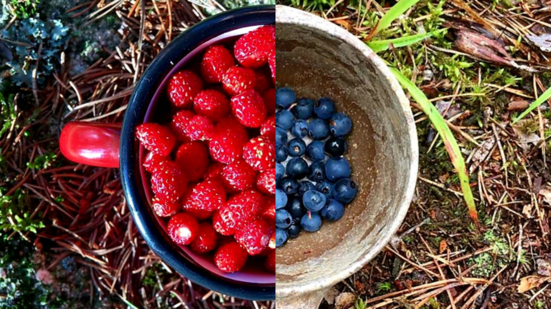 Berry & Mushroom Picking
