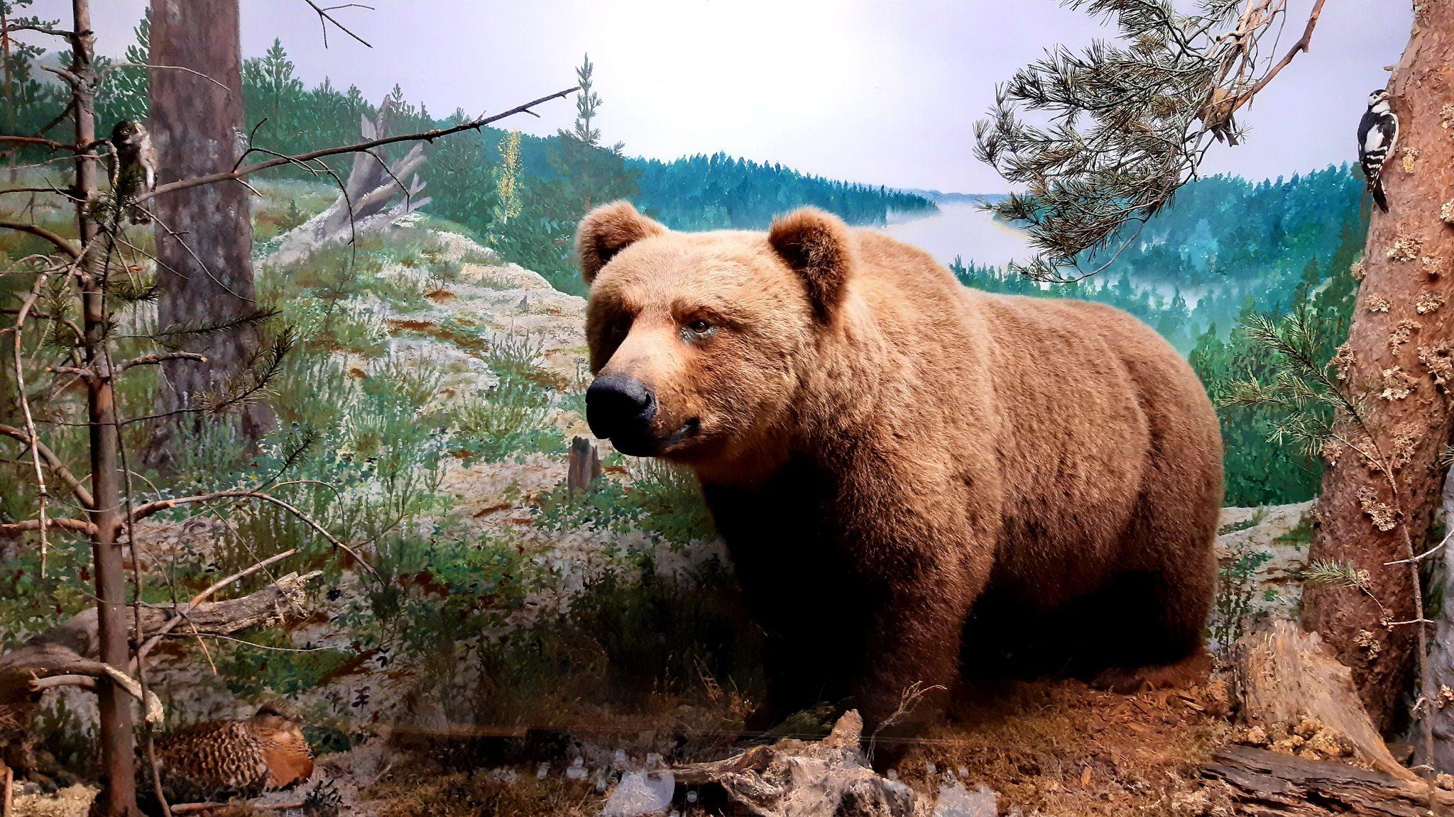 Karhun pyllytys ja muita kansanuskomuksia