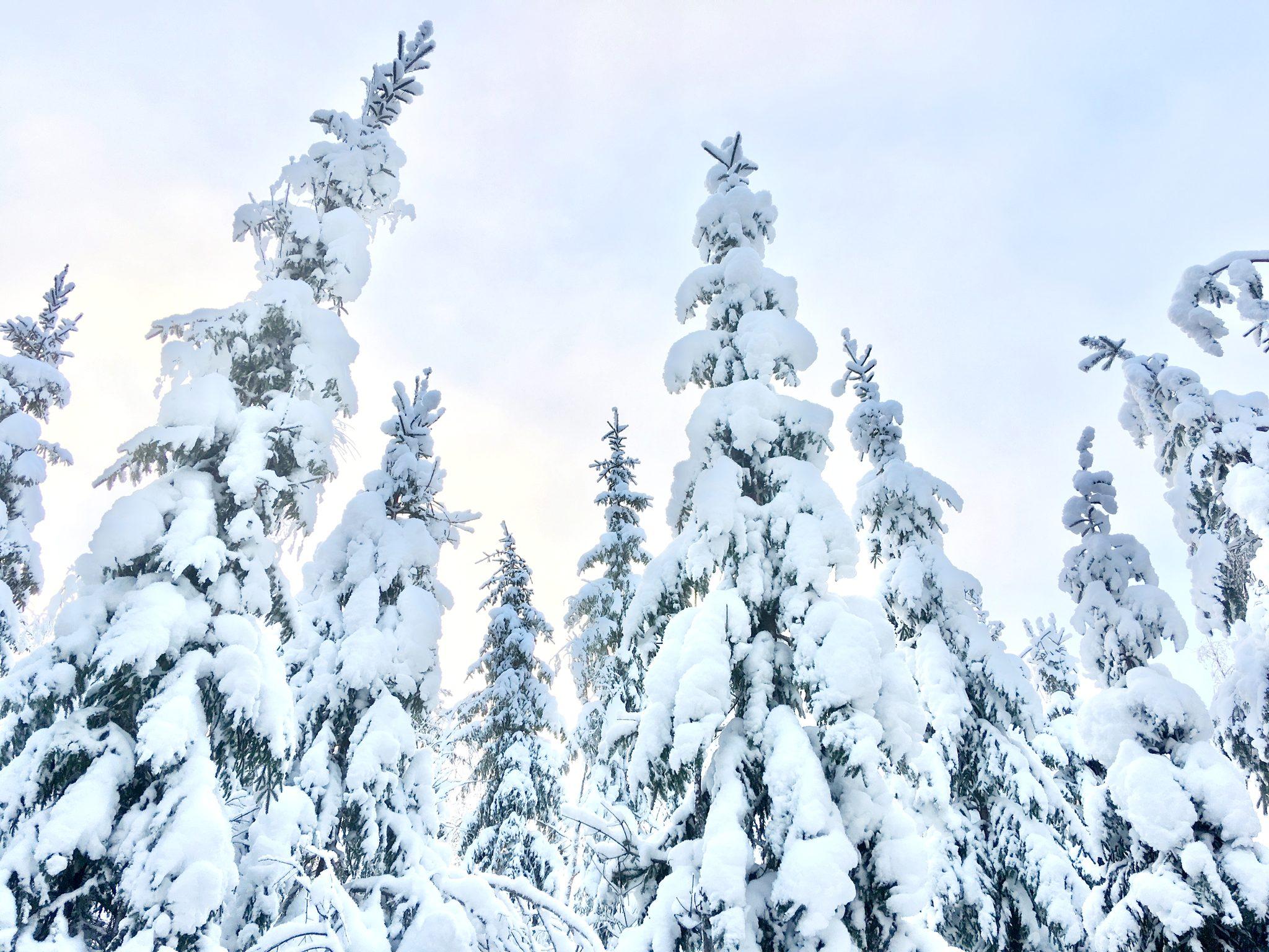 Lumikengillä ristiin rastiin Liesjärvellä su 31.1.