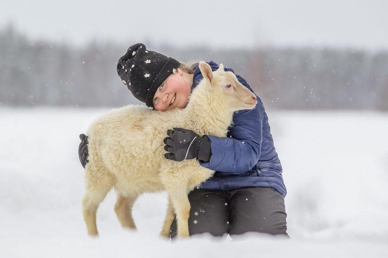Lampaat rakastavat läheisyyttäsi.