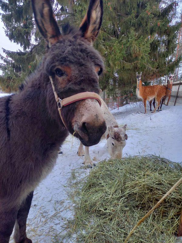 Eläimet ovat kavereita keskenään.