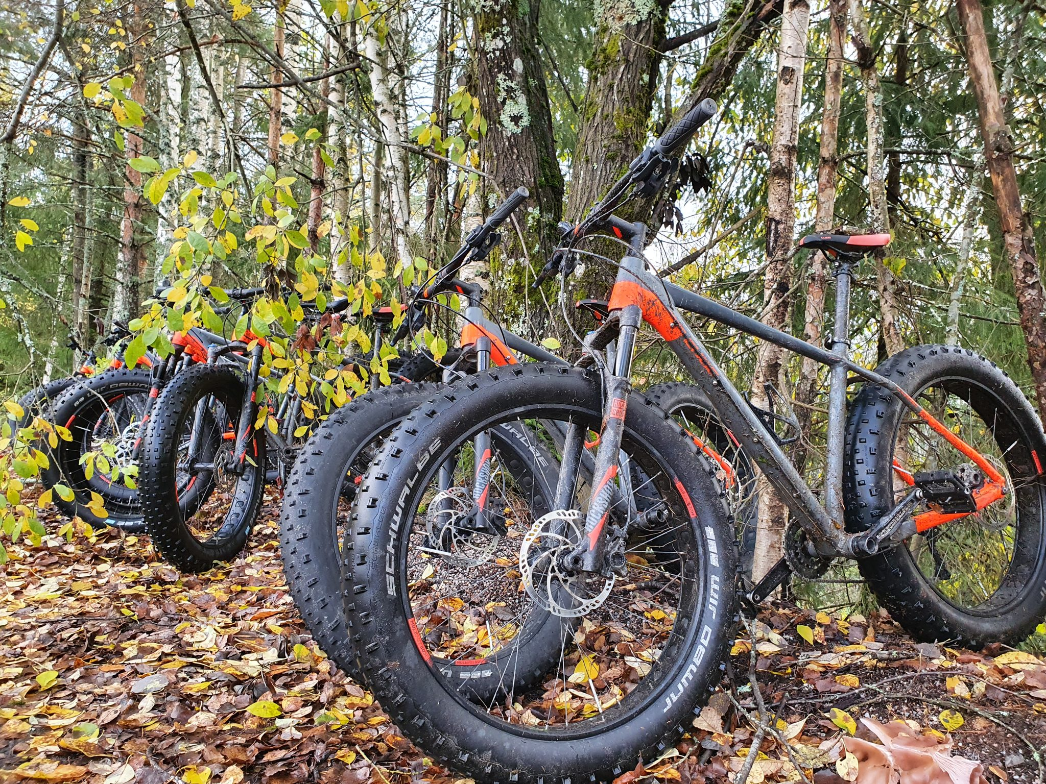 Fatbike rental Nuuksio Nature Center Haltia