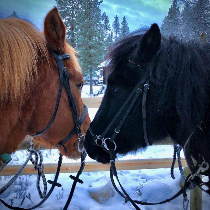 Päivä hevoshulluna