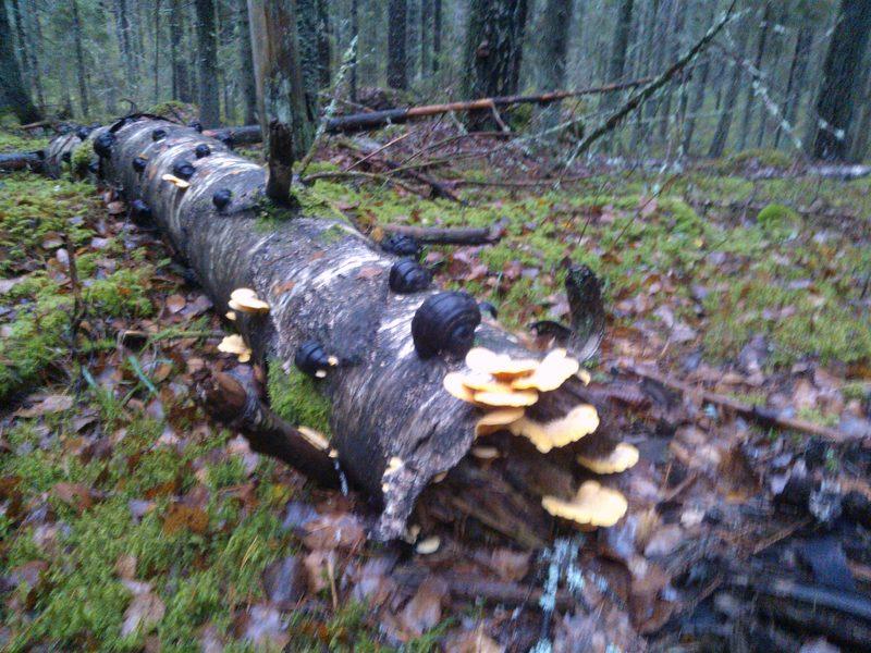 Natura metsä