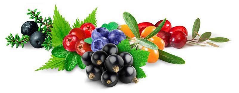 Arktinen Elixir-antioksidanttijuoma