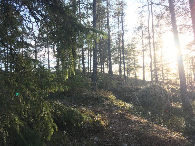 Metsämieli-retki