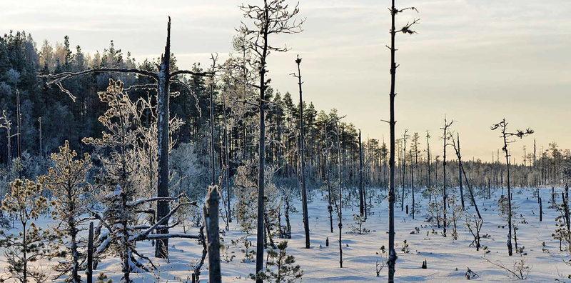 Geoparkin Talvi