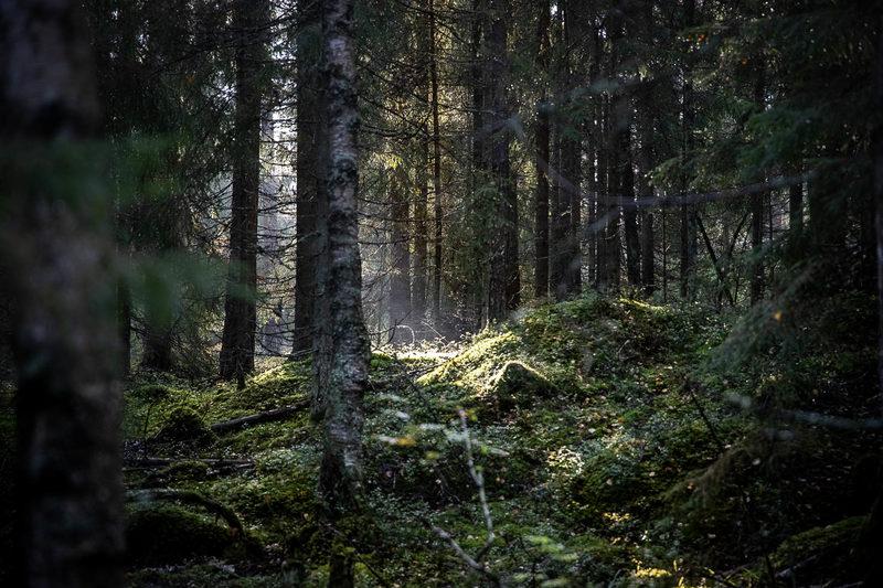 Myyttinen metsä -opastus