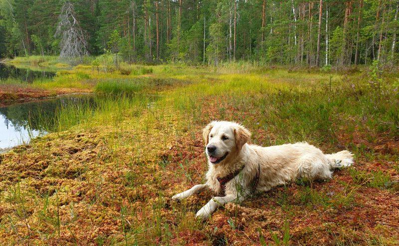 Retkeily koiran kanssa - iltakurssi