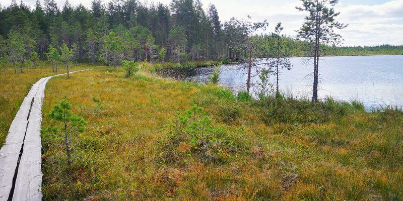 Salamajärven Kansallispuisto, Hirvaankierros 58 km/4 pv