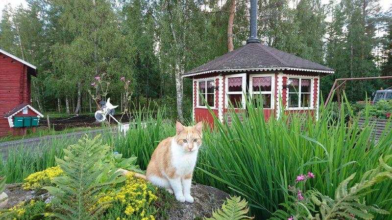 Maatilamatkailu Ilomäen Onni-kissa