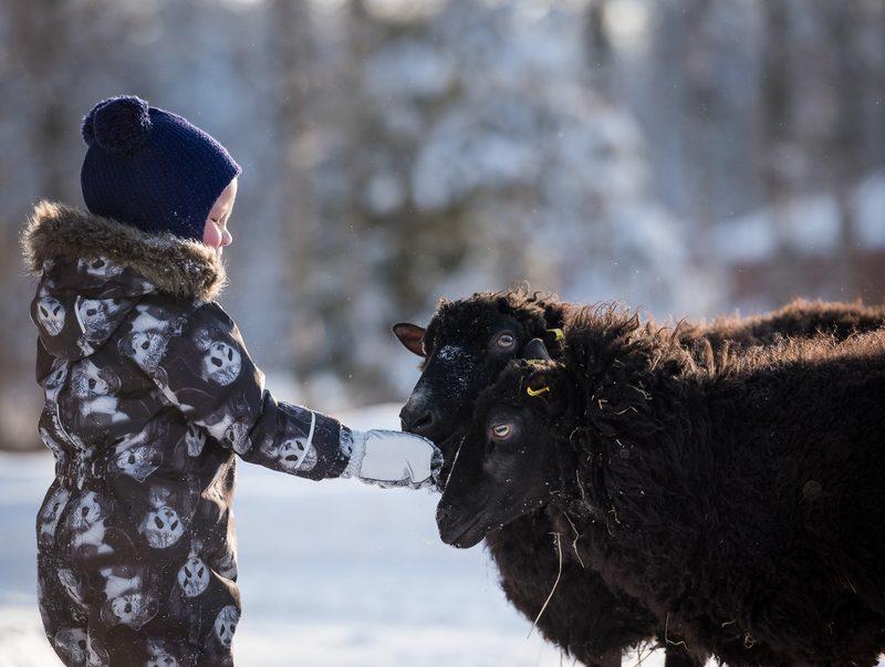 Lapset tutustuvat kotieläimiin maatilamajotuksen ohessa