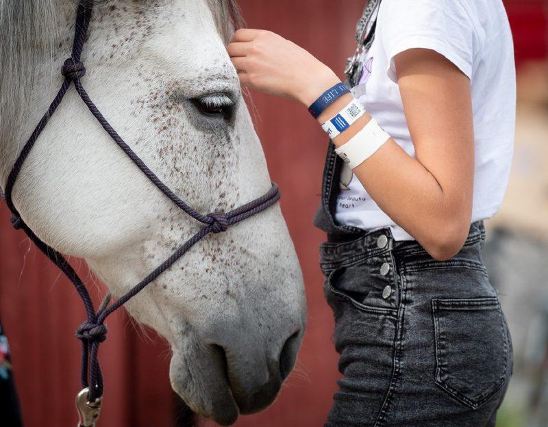 Maatilamatkailu Ilomäen hevosen hoitoa