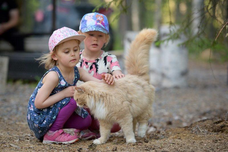 Lapset silittämässä maatilan kissaa