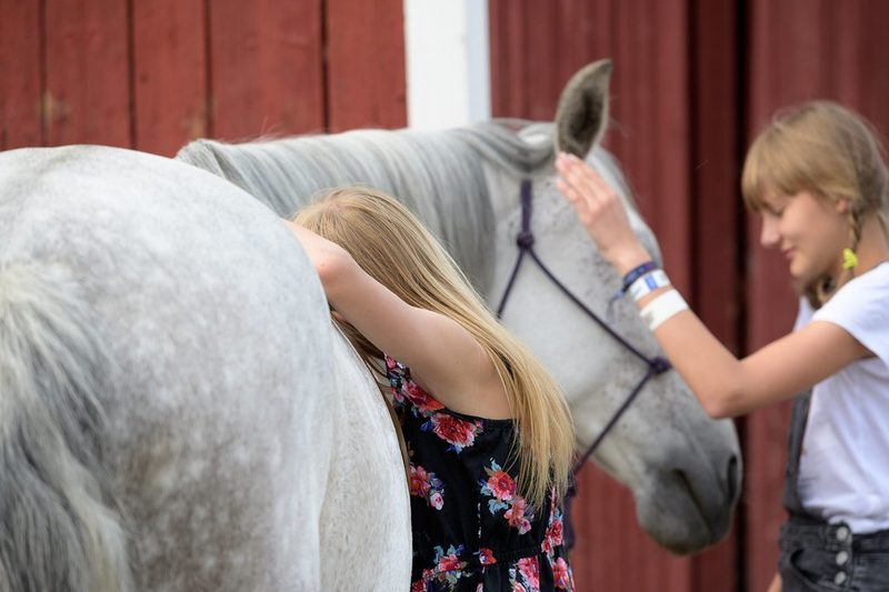 Tytöt hevosen kanssa