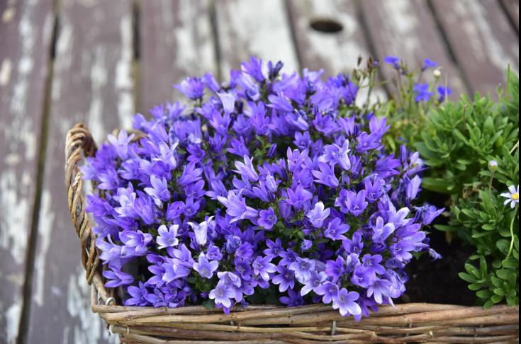 Kukkakoristeet - Keväästä syksyyn asti Ruukkirantaa koristelevat meidän Riitta kukkamestarin kukka-asetelmia