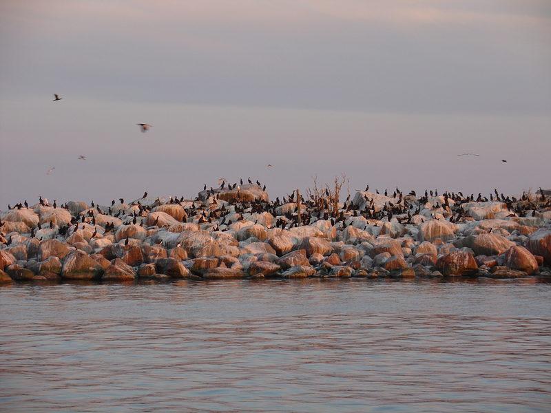 Arktinen linturisteily 17.5.2020 klo 9.00-15.00