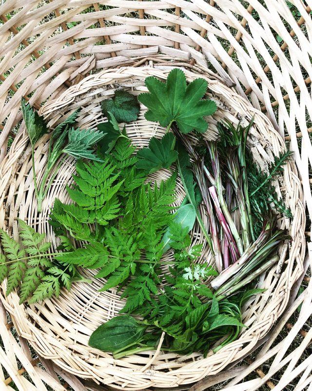 Wild herbs tour in Nuuksio