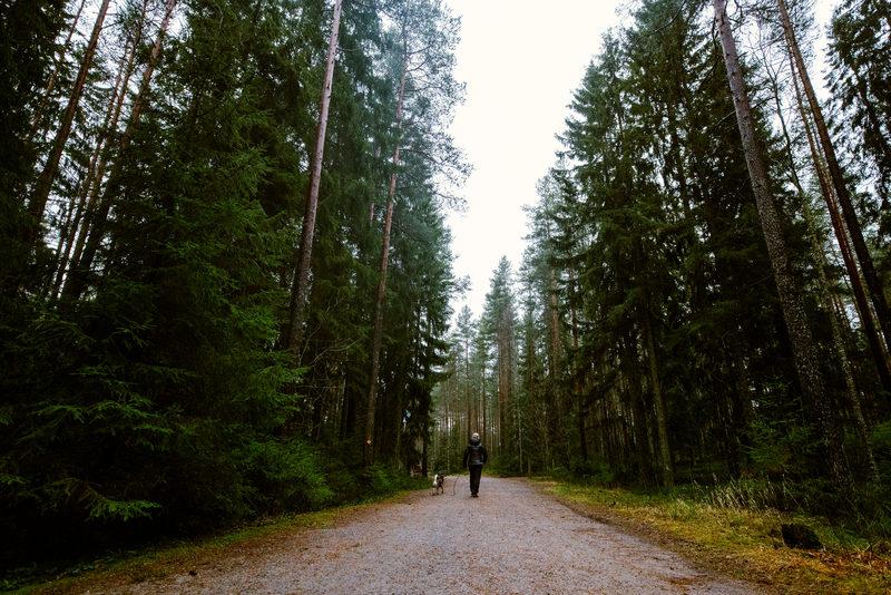 Saapuminen Teijon kansallispuistoon