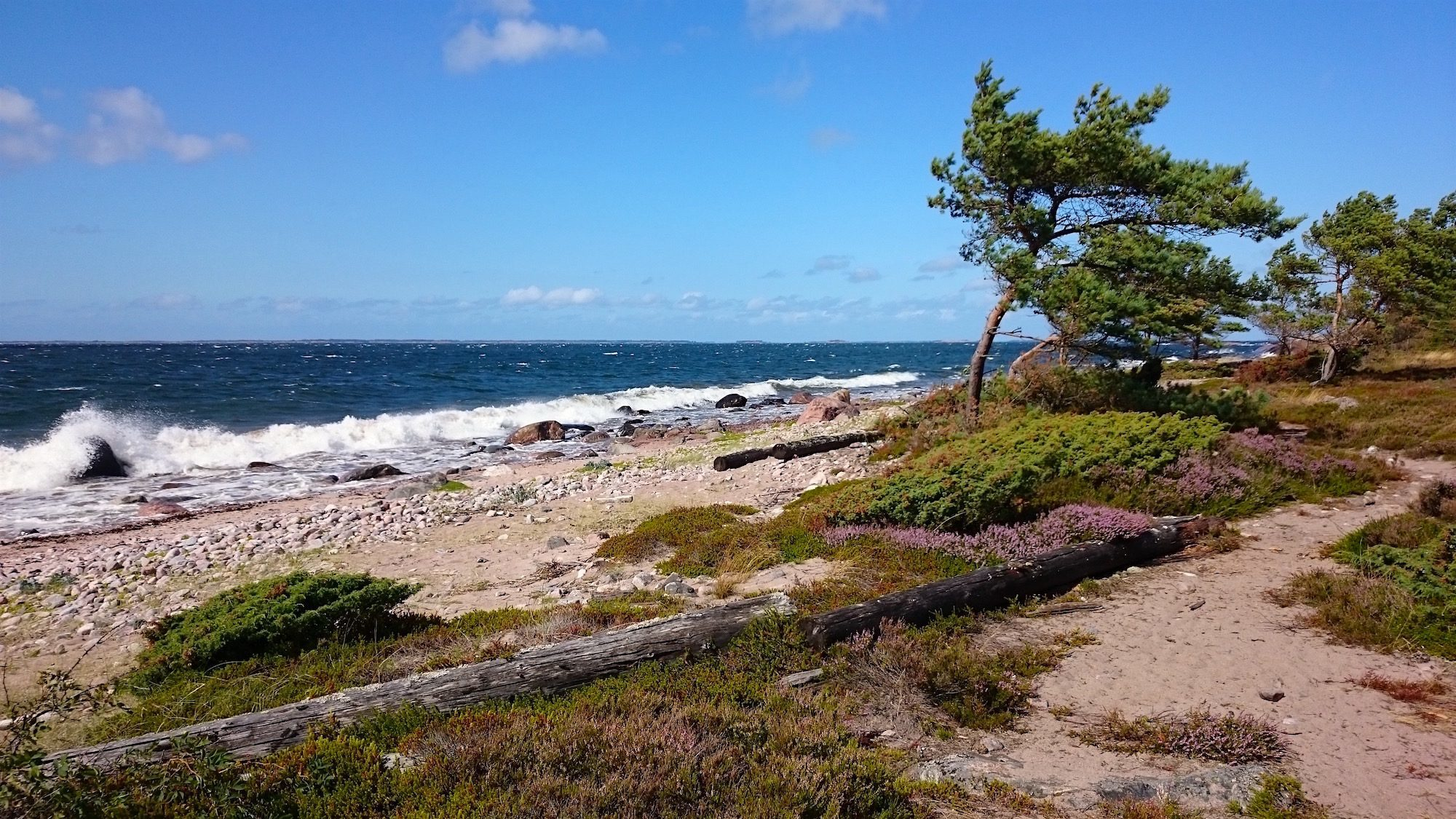 Guided wildlife excursions in Örö fortress island
