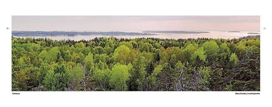 Ritva Kovalainen: Vanhan metsän aarteet