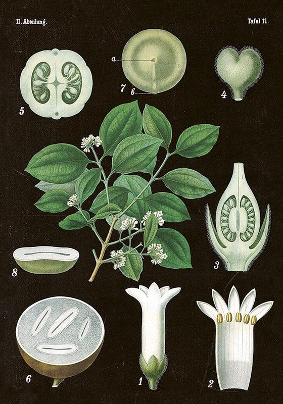 Vintagejuliste, mustapohjainen valkea kukka 35 x 50