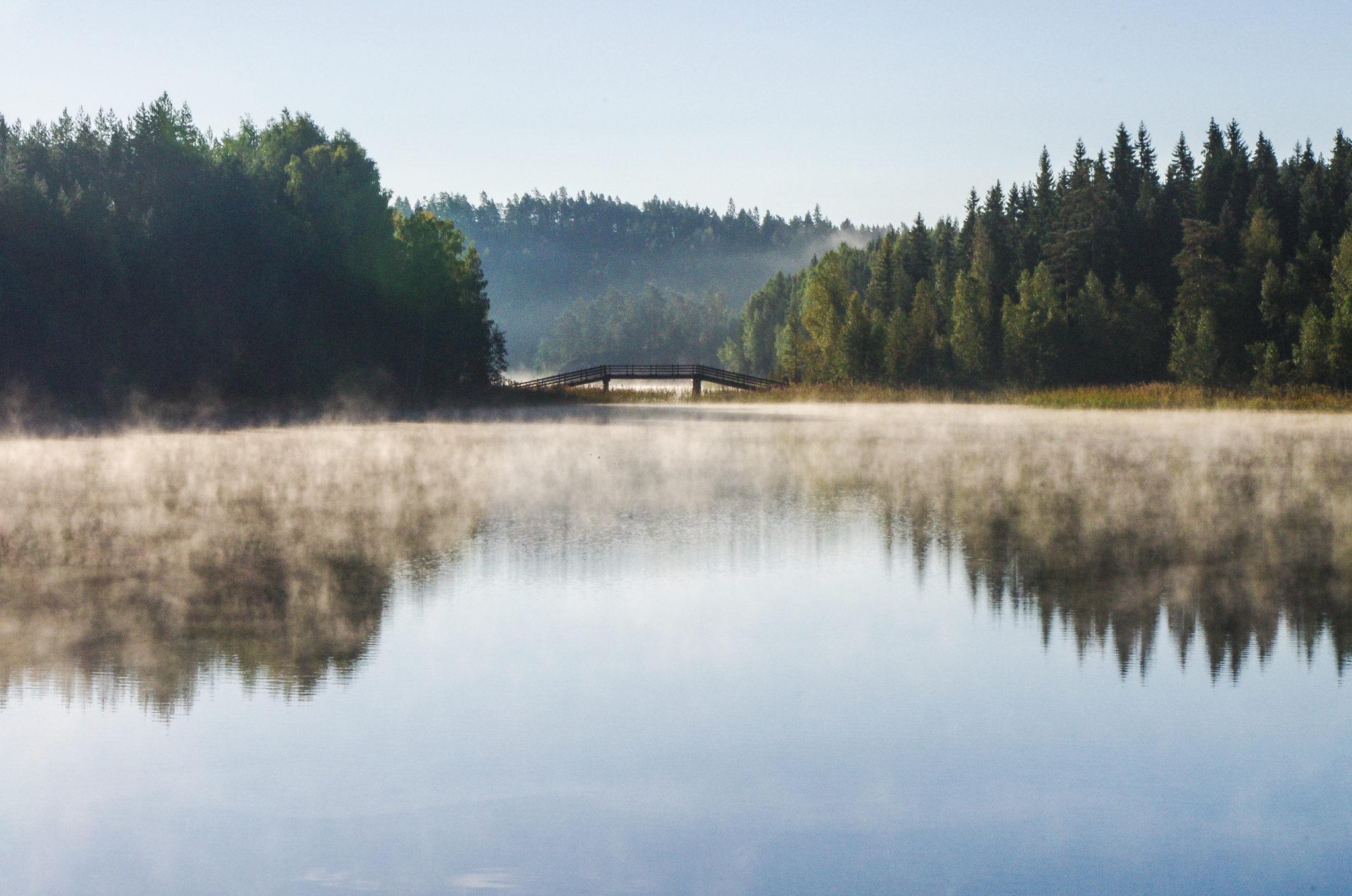Kuuntele metsän ääntä