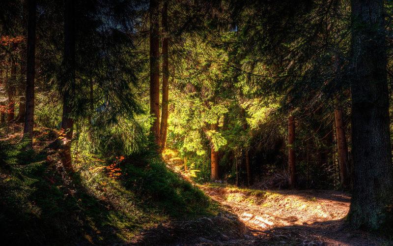 Forest Escape Nuuksio Basecamp, metsäpakopeli