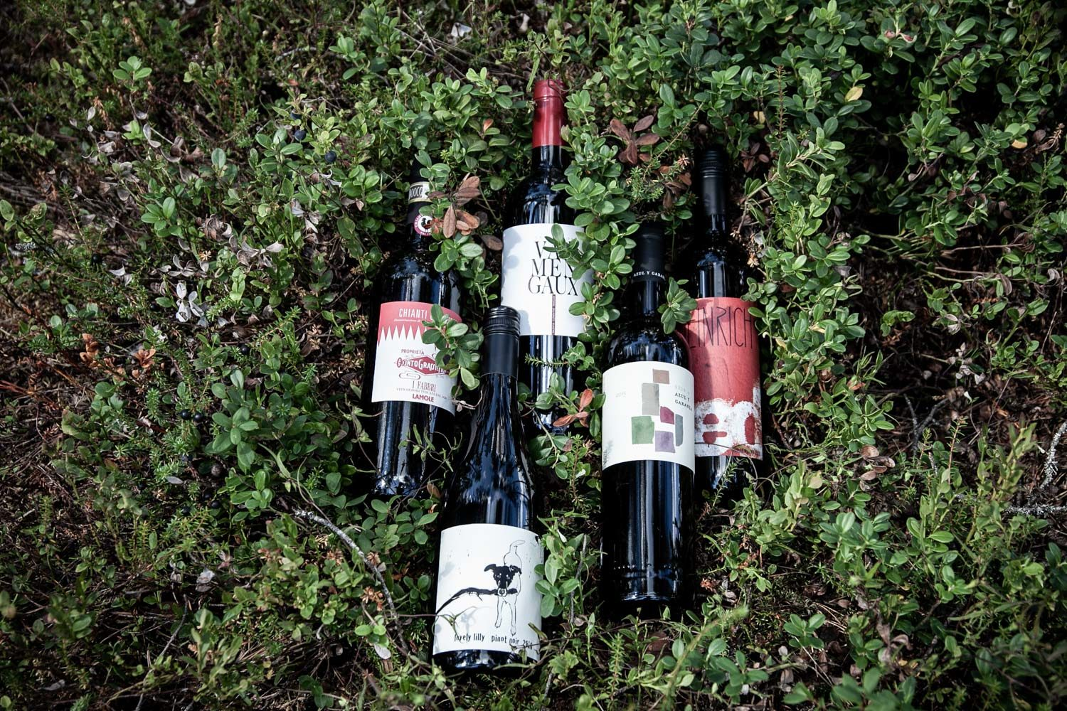 Wine in the Woods -lahjakortti