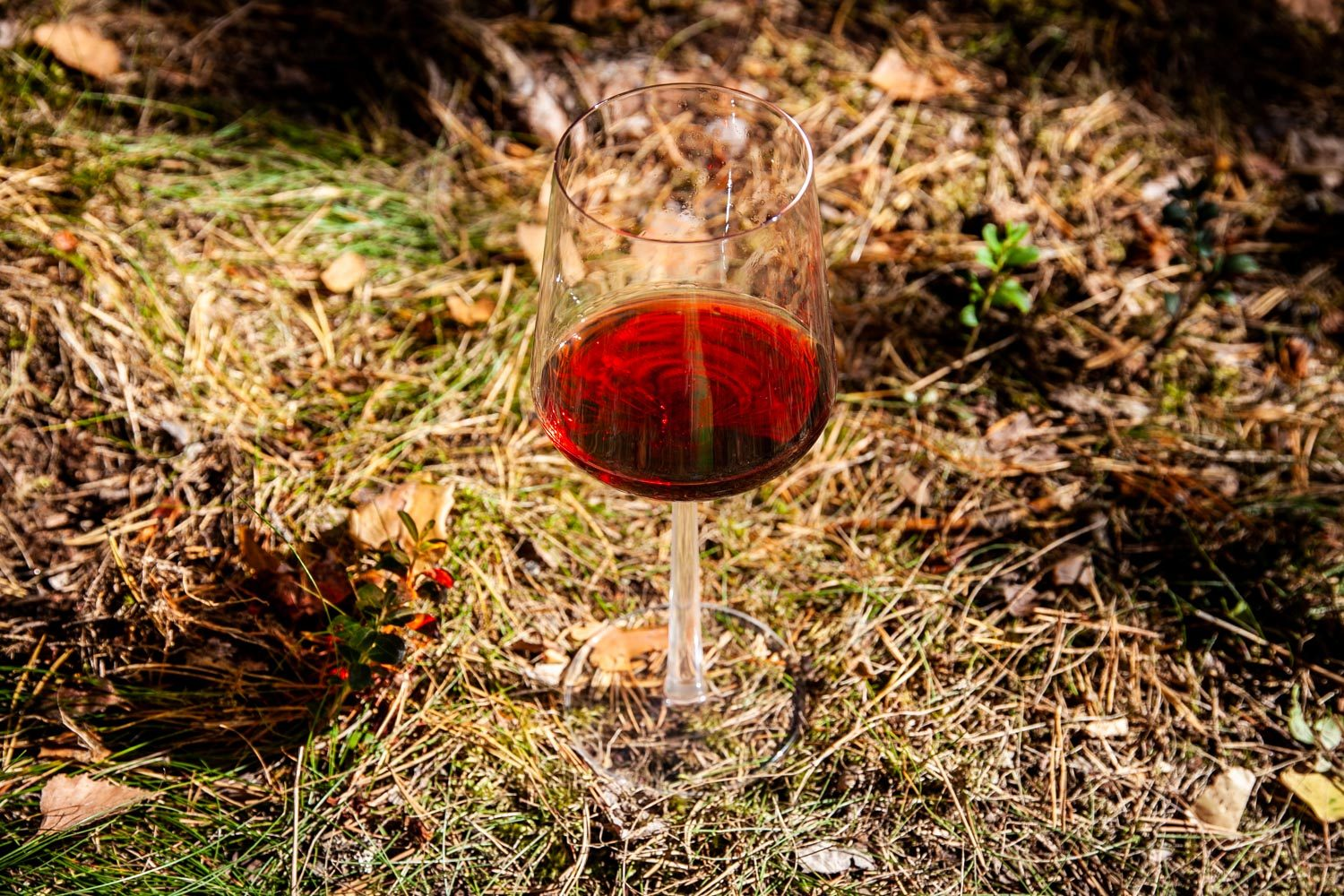 Wine in the Woods
