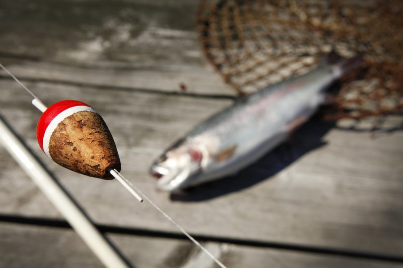 Kalasta Kalajoella