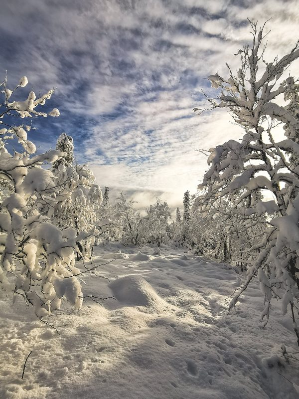 Lumikenkäretki Urho Kekkosen kansallispuistoon Tankavaarasta, 2h