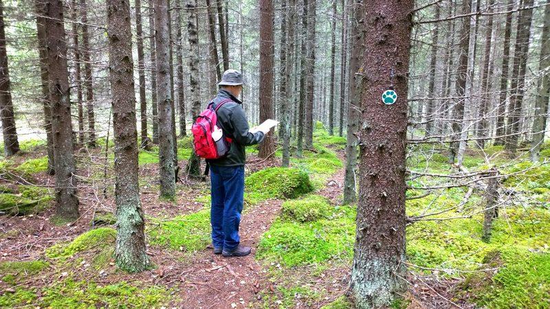 Metsäretkellä mieli lepää - Retkeillä voit matkan aikana myös omatoimisesti